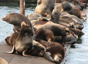 sea-lions-on-dock-02
