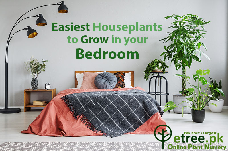 easy plants to grow in bedrooms pakistan