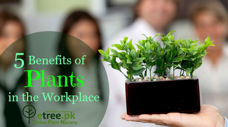 benefits of office plants