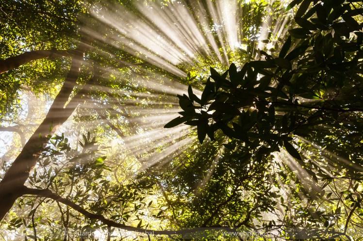 selva-jungla