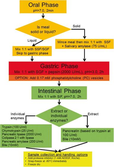 Salivary Amylase Digestion Diagram
