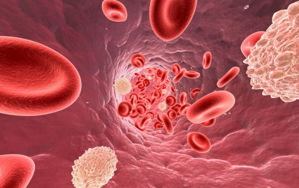 What Are The Causes, Symptoms And Treatment For Thrombocytopenia