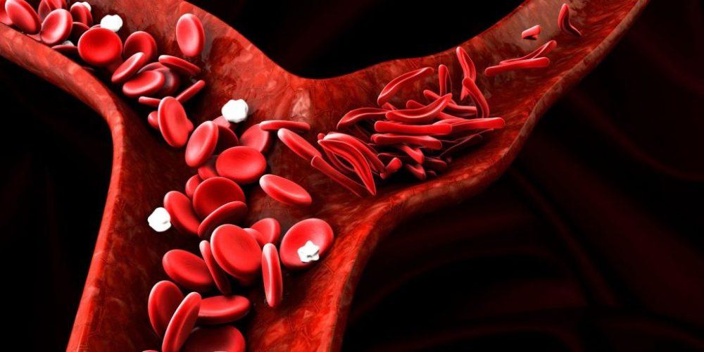 Immune System Role Against Disease ebuddynews