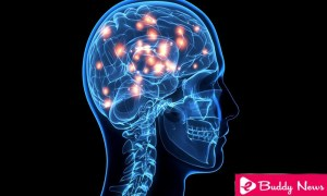 The Success Of A Diet Depends On The Brain Structure - ebuddynews