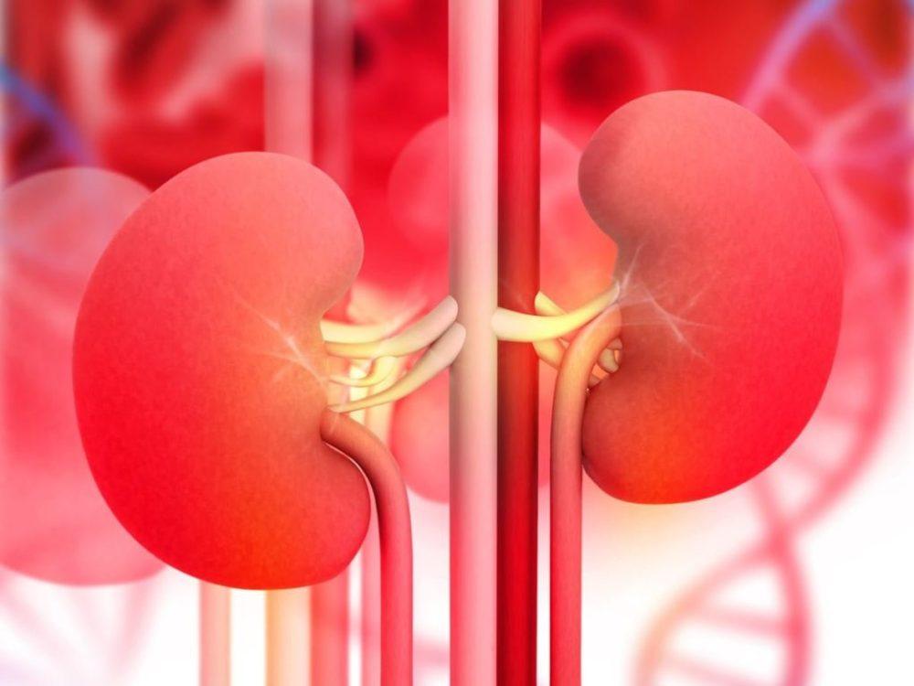 10 Most Common Habits That Damage Kidneys - ebuddynews