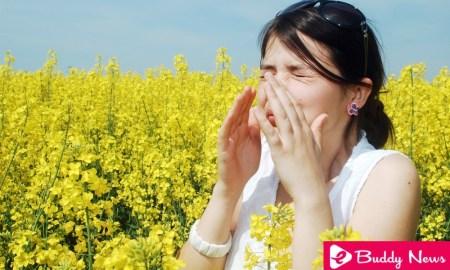 5 Best Herbal Remedies For Allergic Rhinitis - ebuddynews