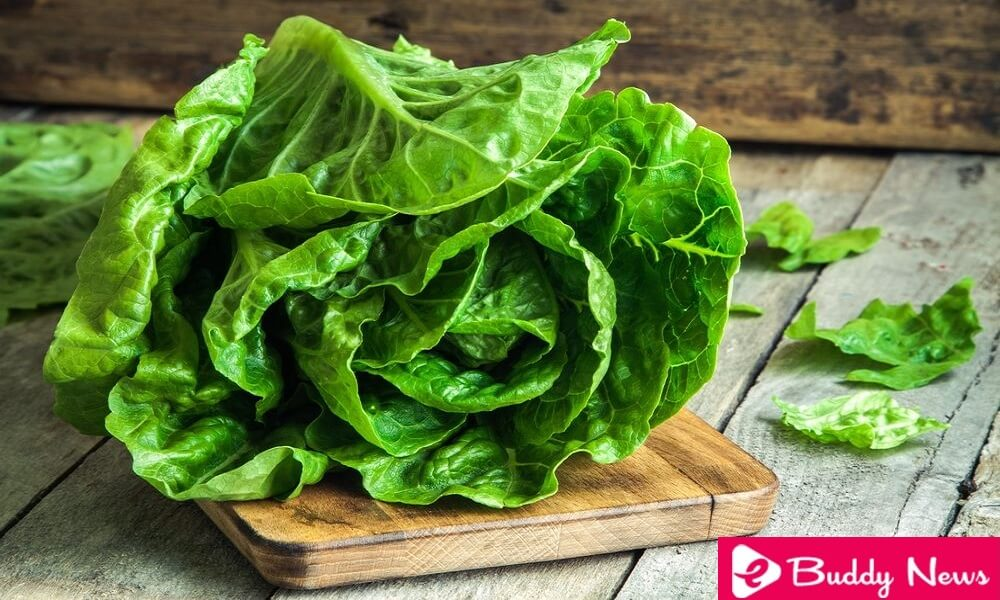 Know The Types, Properties and Benefits of Lettuce - eBuddy News