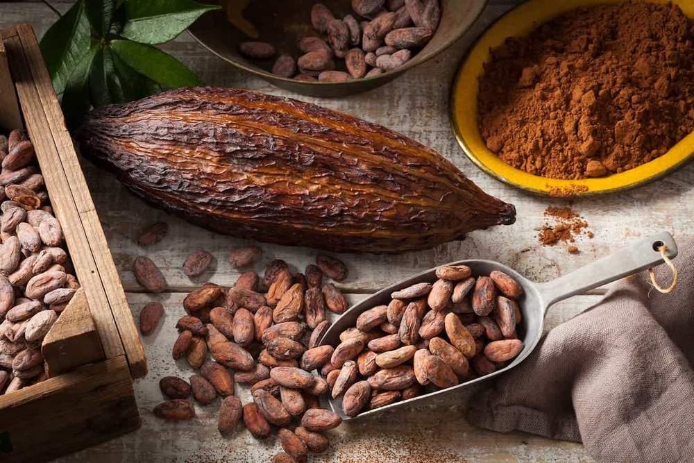 Cocoa Benefits - eBuddy News