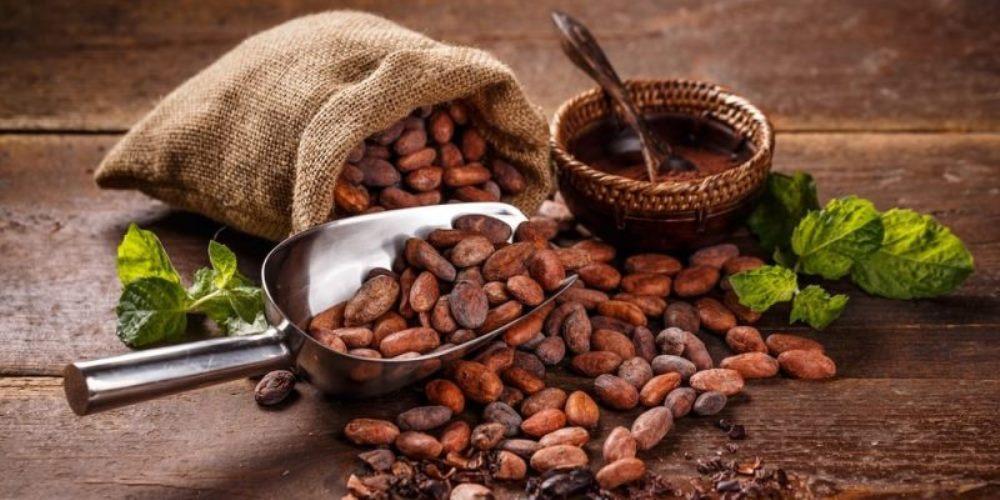Cocoa Origin - eBuddy News
