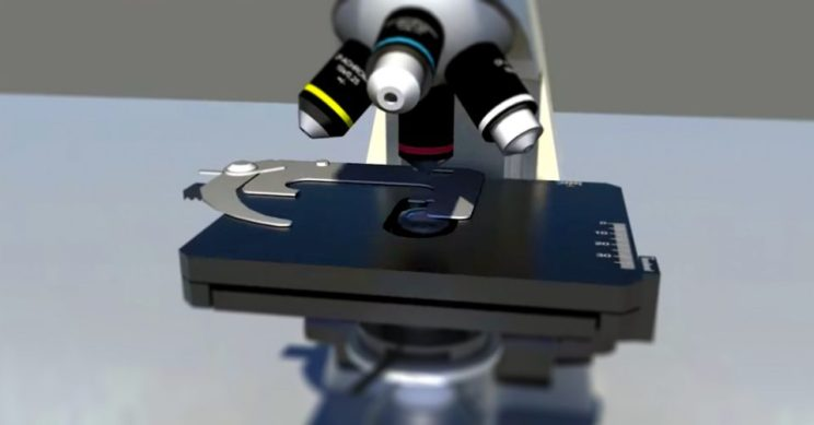 A screenshot of the 3D microscope designed by Ecampus multimedia developers and faculty members.