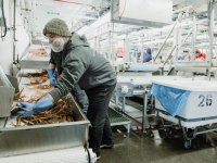 Tommy Sheridan, Oregon State Ecampus alum, at work in a crabbing factory in Alaska.