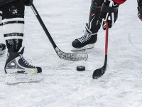 Hockey players face off with a puck on the ice between their sticks.