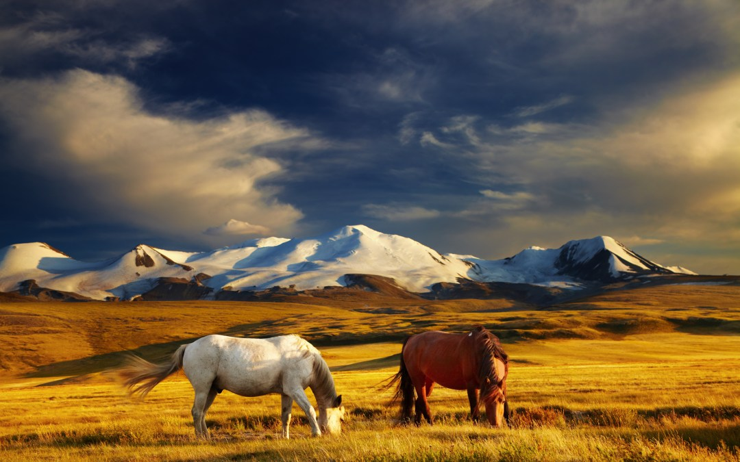 Tour Mongolia – Have You Tried Yet?