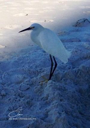 Birdie-lisadrewphotos