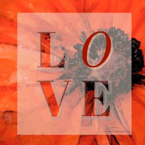 Poppy Love by Lisa Drew Minneapolis