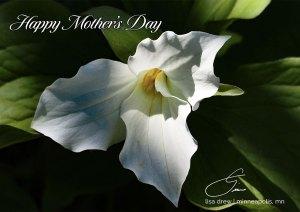 Mothers-Day-Trillium-eCard-Lisa-Drew-Photos-Minneapolis