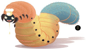 Uok_beetle_Larvae_richard-peter-david