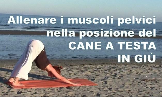 Allenare i muscoli pelvici nella POSIZIONE DEL CANE A TESTA IN GIÙ