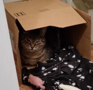 Cat in a small box
