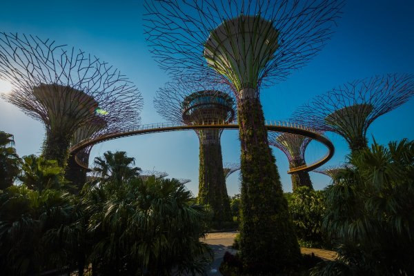 Supertrees gardens by the bay singapore