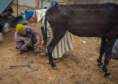 Donkey Shoeing