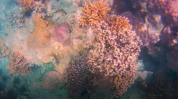 underwater - snorkelling at Abang Island