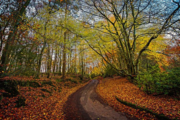 Leading path - how to take photos of trees