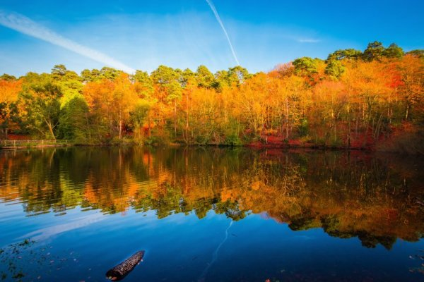 Reflections - How to take photos of Trees