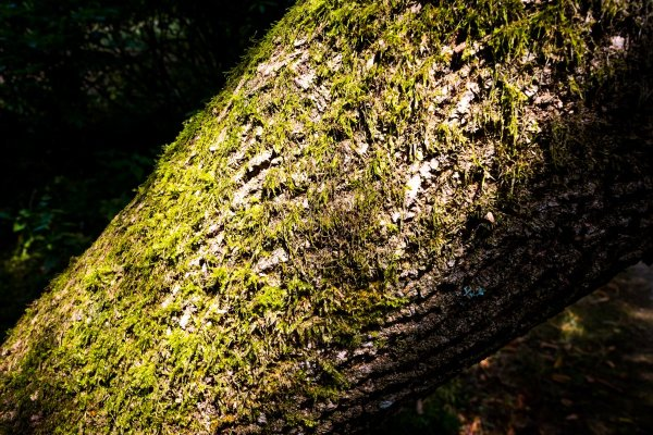 bark - how to take photo of trees