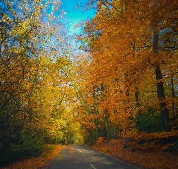 Surrey Hills in Autumn