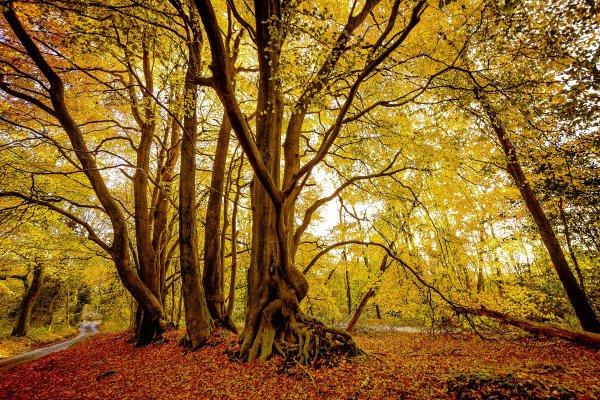 Autumn - Surrey Hills
