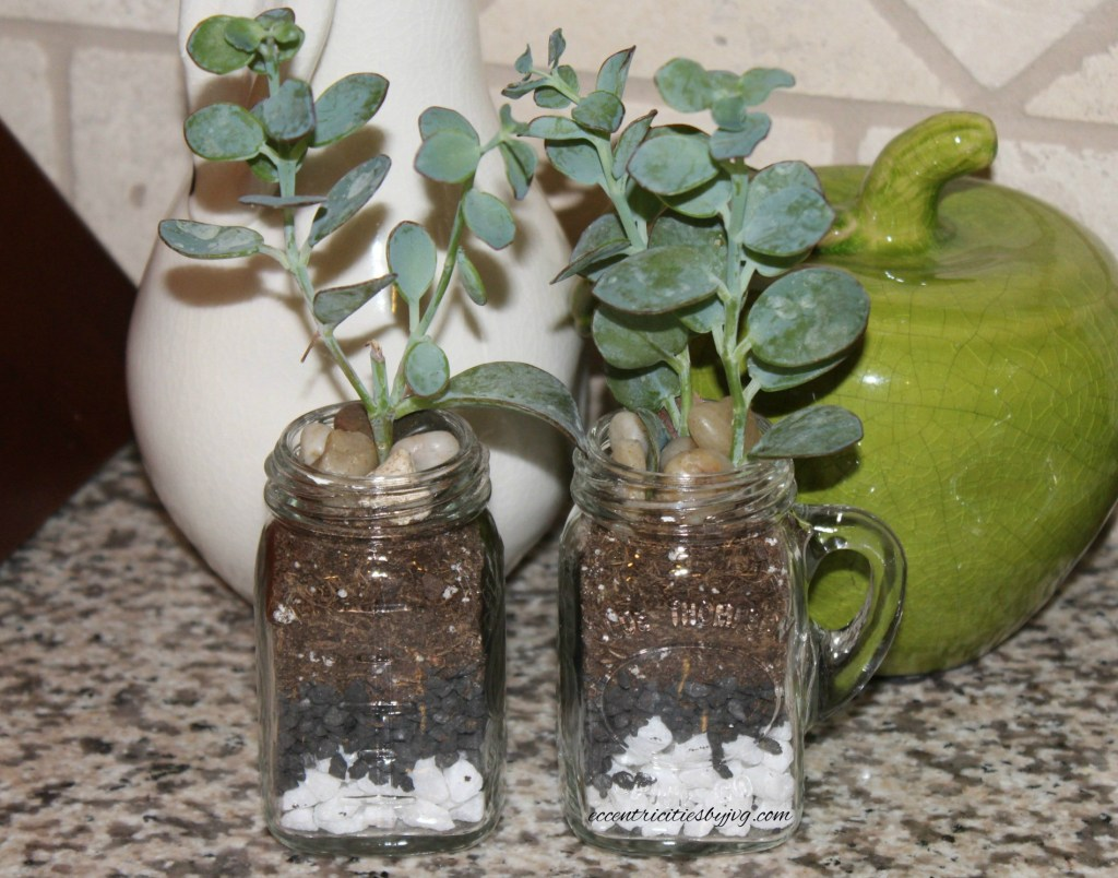 salt and pepper shaker terrarium for small spaces
