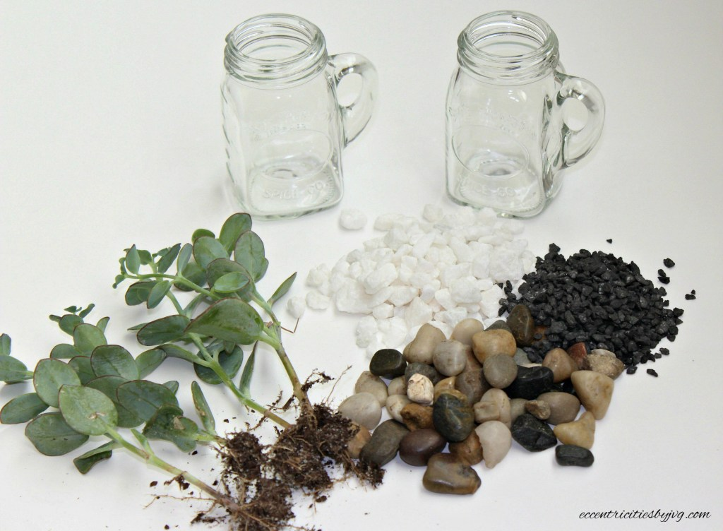 salt and pepper shakers terrarium for small spaces materials you will need