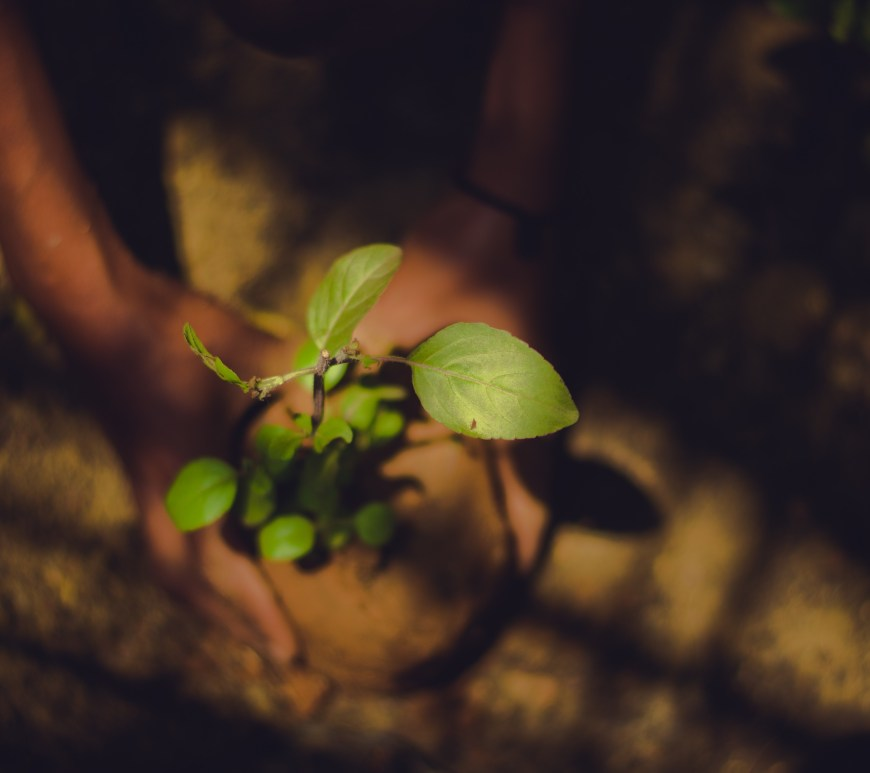 person holding sapling of green plant in pot over dirt
