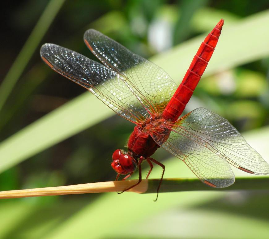 red dragonfly on green leaf
