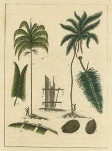 The Manicole and Cocoa-nut Trees