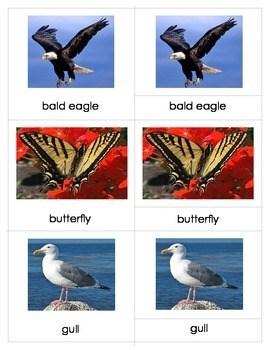 Air Land Water AnimalsMontessori Three Part Cards Set 1 TpT