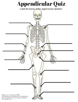 Appendicular Skeleton Labeling Quiz and KEY by Amazing Anatomy | TpT