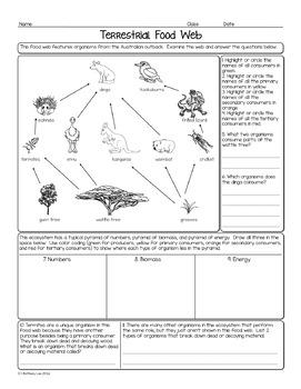 Australian Terrestrial Food Web Biology Homework Worksheet