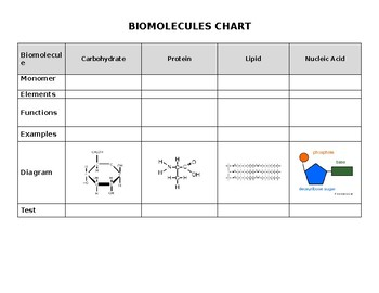 Biomolecules Chart By L4 Learning Resources