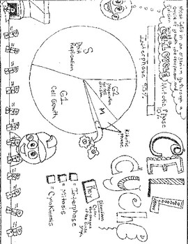 Cell Cycle Coloring Sheet By Stefanisin Science Fun Tpt