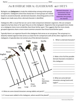 Classification Cladograms And Trees By Biology Roots