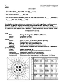 Dna Mutations Notes Worksheet