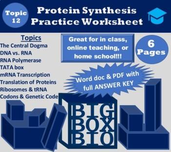 Dna Transcription And Translation Practice Worksheet With