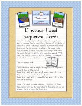 Dinosaur Fossil Sequence Cards By Ck Montessori