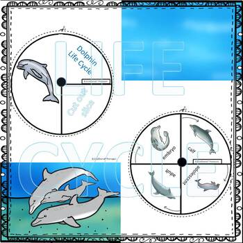 Dolphin Life Cycle Spinner By Donna Thompson Tpt