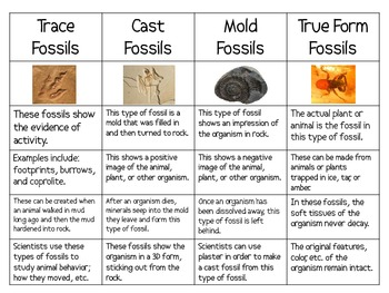 Four Types Of Fossils Sort Packet By Smart Chick