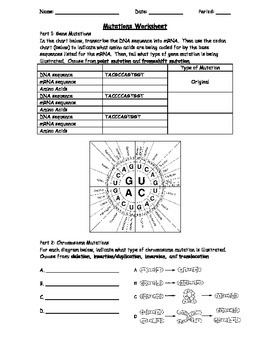 Genetic Mutations Worksheet Using A Codon Chart By The