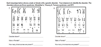 Genetics Reading Karyotypes Practice By Spyglass Biology