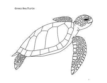 Sea Turtle Coloring Page Worksheets Teaching Resources Tpt